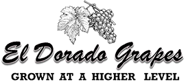 El Dorado Grapes - Discover Sierra Gold...Grapes from the Foothills of El Dorado -